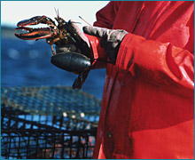fishing and aquaculture